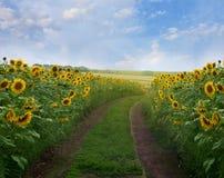 De weg van de zomer Royalty-vrije Stock Afbeeldingen
