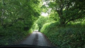 De weg van Dorset in bos in de recente lente Royalty-vrije Stock Afbeeldingen