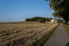 De weg van een de herfstlandschap met gevallen appelen Stock Afbeeldingen
