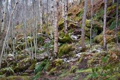 De weg van Forrest Stock Afbeelding