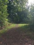 De weg van Forrest Royalty-vrije Stock Foto's