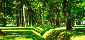 De Weg van de gangsteeg met Groene Bomen in Forest Beautiful Alley, weg in Park Royalty-vrije Stock Fotografie