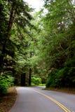 De weg van het asfalt in bos Royalty-vrije Stock Foto's