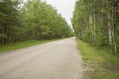 De weg van het asfalt in het bos Royalty-vrije Stock Foto's