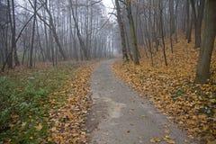 De weg van het asfalt in het hout Royalty-vrije Stock Fotografie