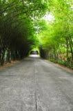 De weg van het bamboe Stock Afbeeldingen
