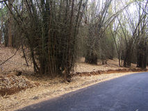 De weg van het bamboe stock foto