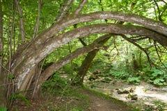 De weg van het bos Royalty-vrije Stock Fotografie