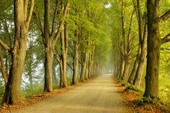 De weg van het de lijnplatteland van de boom royalty-vrije stock afbeeldingen