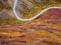 De Weg van het Denalipark in de Herfst royalty-vrije stock afbeeldingen