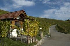 De weg van het gebied in wijngaard in Remstal Royalty-vrije Stock Afbeelding