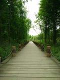 De weg van het moerasland stock afbeeldingen