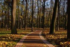 De weg van het park stock foto