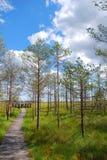 De weg van het park Royalty-vrije Stock Foto