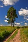 De weg van het pijnboomdorp Stock Foto