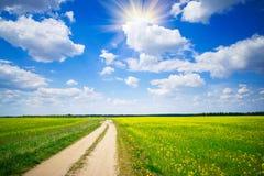 De weg van het platteland en gouden gebied van raapzaden. Royalty-vrije Stock Afbeeldingen