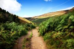 De weg van het platteland van adelaarsvaren Royalty-vrije Stock Foto