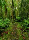 De weg van het regenwoud stock fotografie