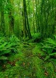 De weg van het regenwoud Stock Foto's