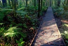 De Weg van het regenwoud Stock Afbeeldingen
