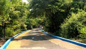 De Weg van het stadspark Stock Fotografie