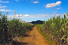 De weg van het suikerriet stock foto's
