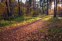 De weg van het vuil in de herfstbos Royalty-vrije Stock Fotografie