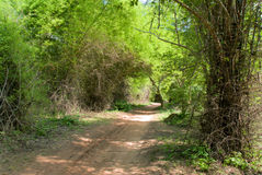 De weg van het vuil in wildernis Stock Afbeelding