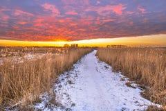 De weg van het de winterlandschap door moerasland Stock Afbeelding