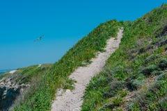 De weg van het de zomerlandschap op de heuvel Royalty-vrije Stock Fotografie