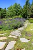 De weg van de lavendeltuin royalty-vrije stock afbeelding