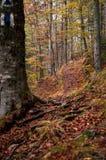 De weg? van liefde - gevormde voeten met harten Stock Foto's