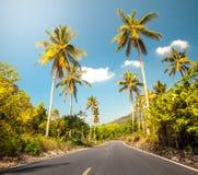 De weg van Nice asfalt met palmen stock afbeelding