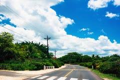 De weg van Nice asfalt met palmen tegen het blauw stock fotografie