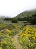De weg van Wildflower Stock Foto's