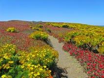 De weg van Wildflower, Anacapa   royalty-vrije stock afbeeldingen