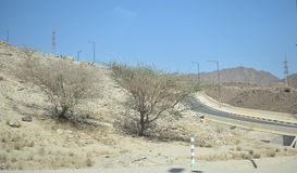 De weg van de woestijnsafari in woestijn en bomen Stock Foto