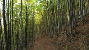 De weg in Vergankelijk Forest Tourists loopt langs de weg stock videobeelden