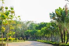 De weggang van de tuin in openbaar park Royalty-vrije Stock Foto's
