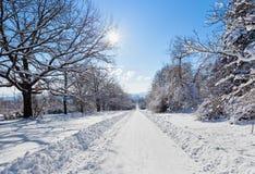 De weglandschap van de winter met sneeuw behandelde bomen en heldere zon Stock Afbeeldingen