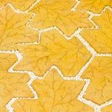 De wegtextuur van de tuin Stock Afbeeldingen