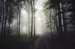 De wegtrog verrukte mistig bos stock afbeeldingen