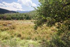De weide bij Cascade springt Nationaal Park op stock foto