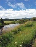 De Weide en de Stroom van Oregon Stock Afbeeldingen
