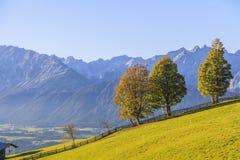 De weide van de alp met sommige bomen royalty-vrije stock foto