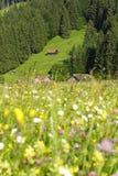 De weide van alpen Stock Foto's