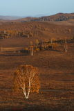De weide van Bashang in inter-Mongolië van China Royalty-vrije Stock Foto