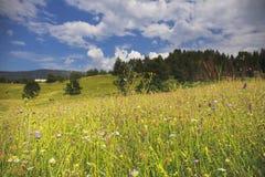 De weide van de bergbloem met bos en blauwe bewolkte hemel Stock Foto's