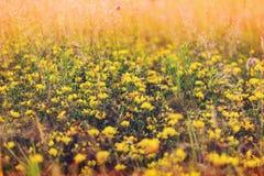 De weide van bloemen Royalty-vrije Stock Foto