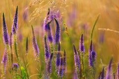 De weide van bloemen Royalty-vrije Stock Foto's